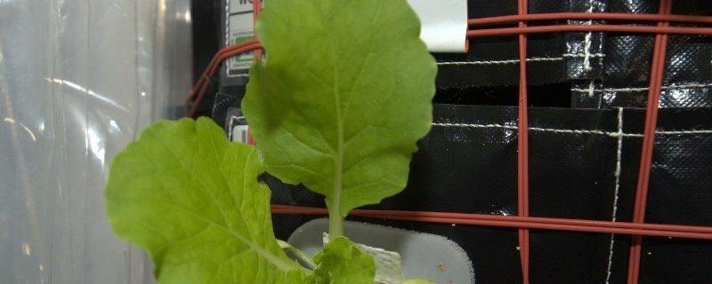 Plante qui pousse dans l'espace