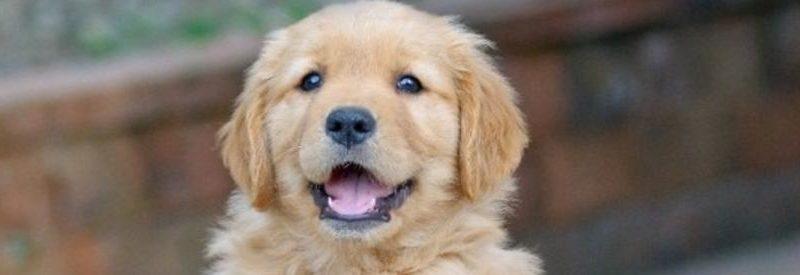 Le budget pour l'adoption d'un chien