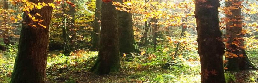 Une forêt privée